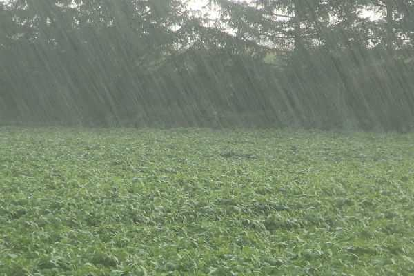 farmers-should-be-using-summer-rain-coimbatore-agriculture-department