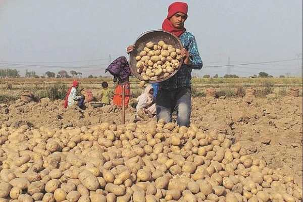 pepsico-to-make-an-out-of-court-settlement-with-gujarat-potato-farmers
