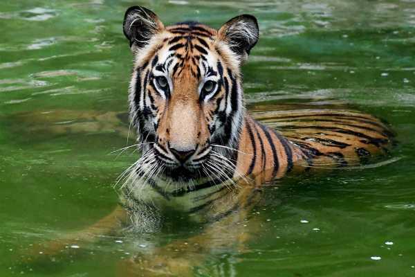ice-slabs-fruits-glucose-keep-animals-cool-at-gujarat-zoo
