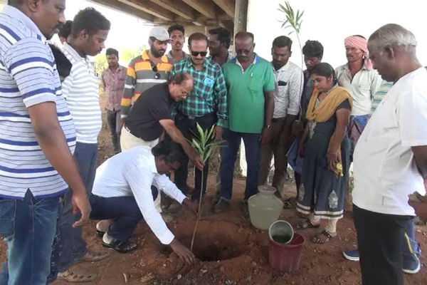 trees-planted-on-akshayatriti