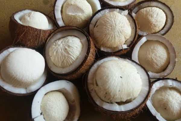 coconut-flower-will-reduce-cholesterol