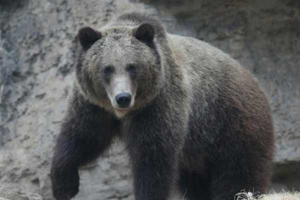 jammu-60-year-old-man-killed-in-attack-by-wild-bear-in-poonch
