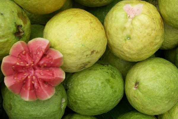 eat-guava-age-in-youth