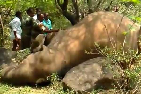 4-year-old-elephant-dead