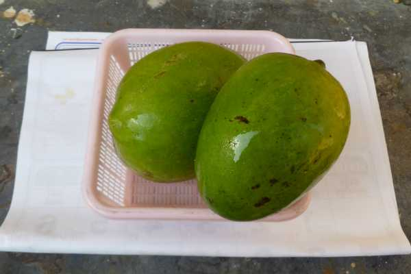 are-women-affected-by-mangoes-of-mango
