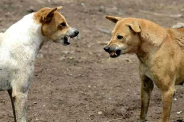 devki-a-7-year-old-girl-was-mauled-to-death-by-a-pack-of-stray-dogs-in-barsana-up