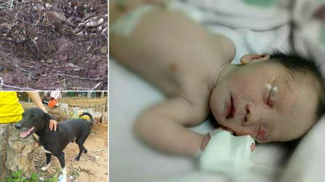 hero-dog-saves-buried-baby-in-northeastern-thailand