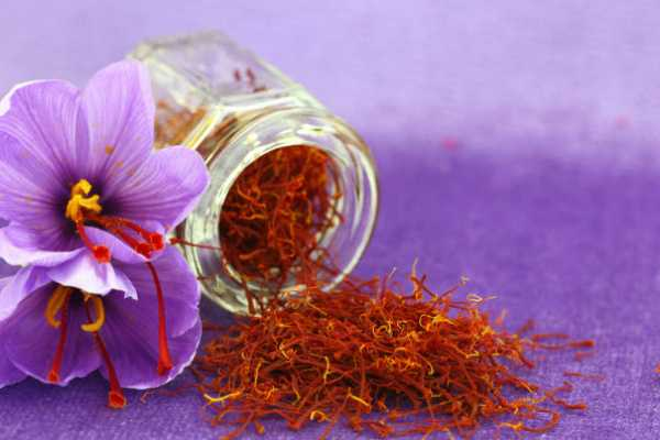 eat-saffron-to-get-a-beautiful-baby