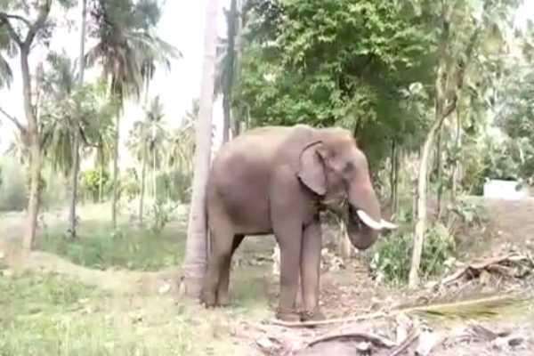 pollachi-wild-elephant-repel-into-the-forest