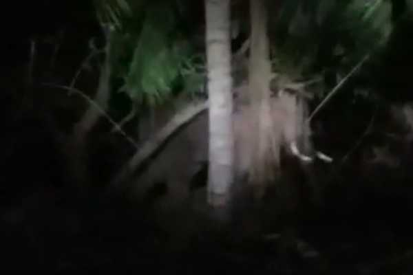 wild-elephant-attacked-the-forest-department-jeep