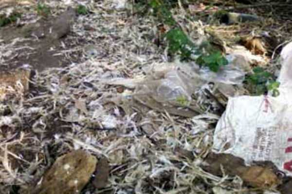 10-tonnes-of-chicken-waste-from-kerala-have-been-confiscated