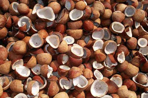 cauldron-coconut-price-increases