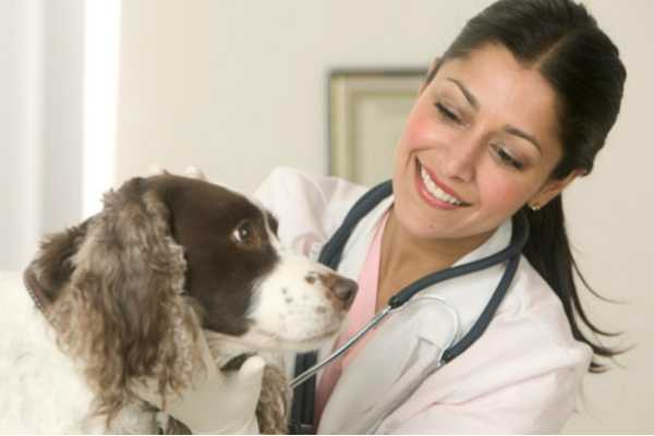 extension-of-time-to-apply-for-veterinary-clinical-study