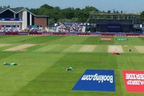 south-africa-versus-sri-lanka-halted-for-interim-period-due-to-swarm-of-bees-passing-through