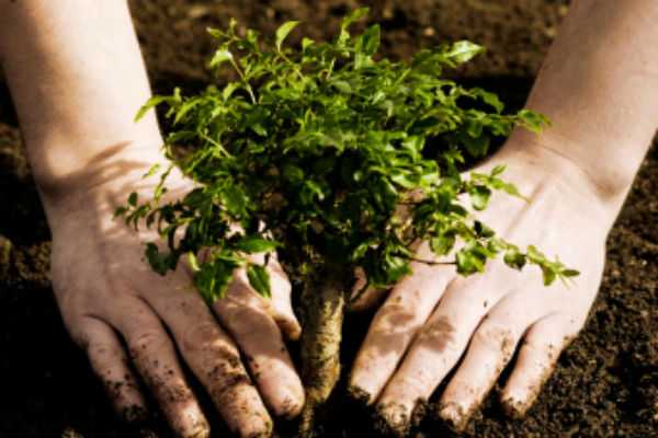 government-officials-and-employees-ordered-to-grow-trees