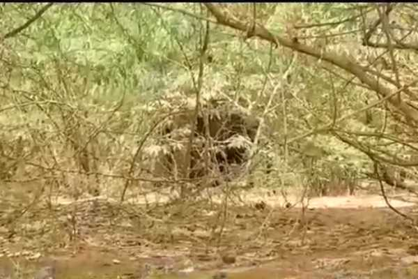 forest-department-arranges-water-and-food-for-wild-elephant-in-coimbatore