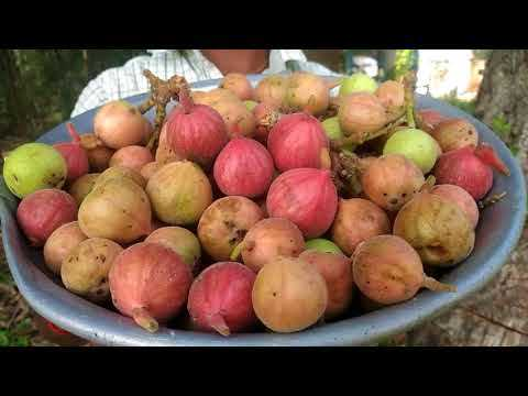 article-about-athi-fruit