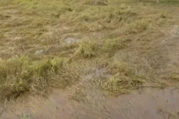 namakkal-500-acres-of-crops-damaged-by-floods