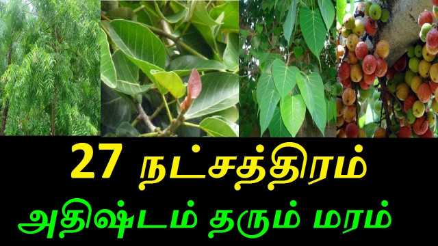 trees-for-27-nakshatras-in-one-place