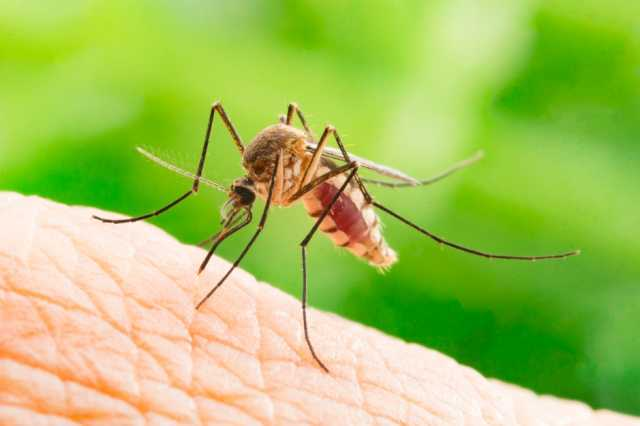 new-attempt-to-prevent-mosquito-borne-disease