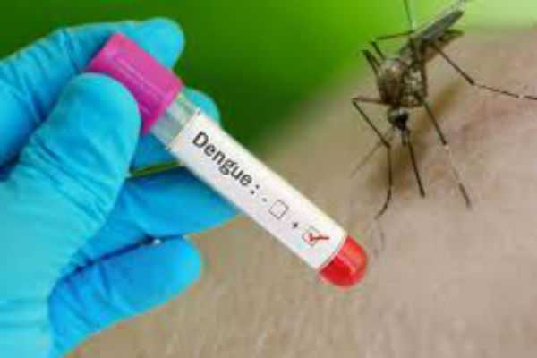 5-best-foods-to-control-the-dengue