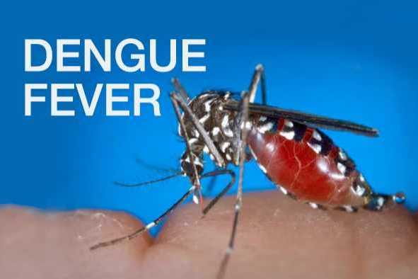 8-people-including-4-children-with-dengue-fever-symptoms-allowed