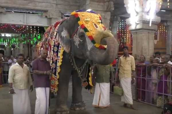 the-temple-elephant-is-play-music-and-worship