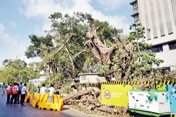 public-protests-in-mumbai-to-cut-3000-trees