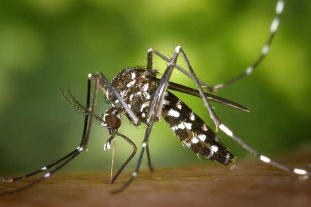 directive-to-prevent-dengue-mosquito-production-in-schools