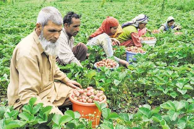indian-army-takes-care-of-kashmir-farmers