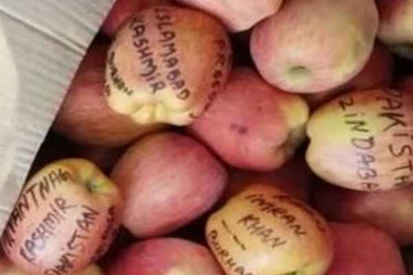 apples-from-kashmir-with-messages-i-luv-burhan-wani-azadi-zakir-musa-come-back-reach-jammu