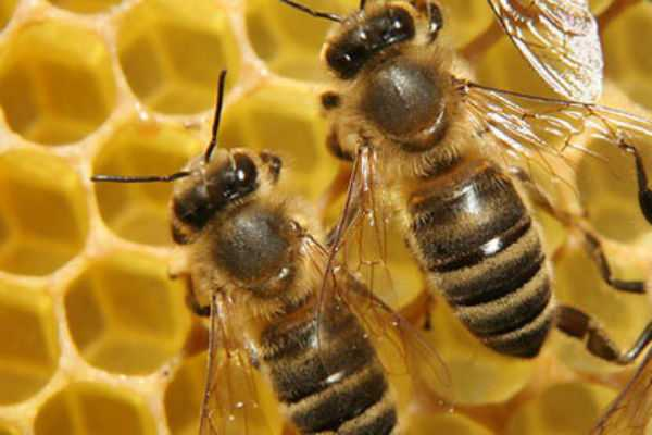 coimbatore-one-day-training-camp-on-beekeeping