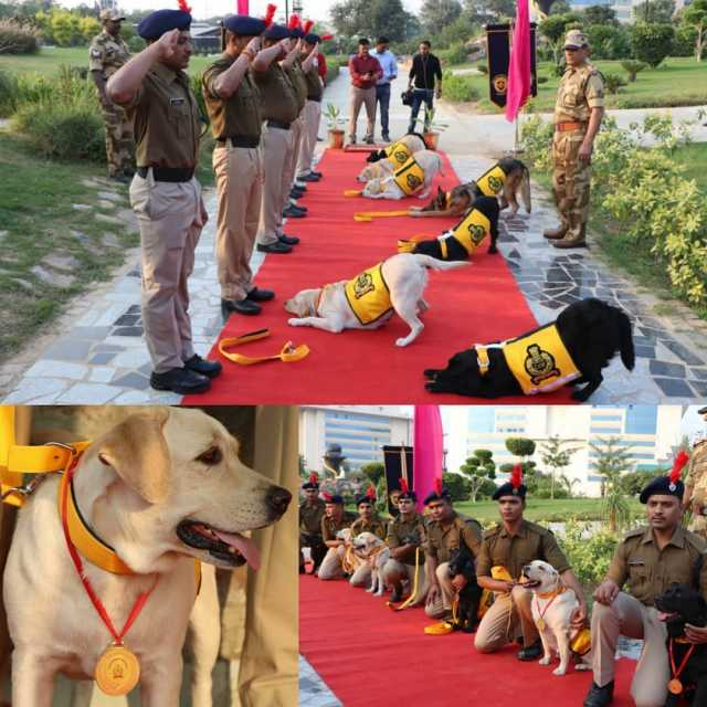 born-as-a-dog-retired-as-a-soldier-cisf-honours-canines-on-retirement