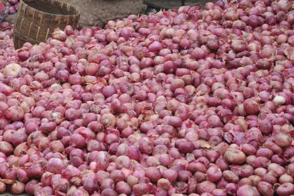 11-thousand-tonnes-of-onion-importing