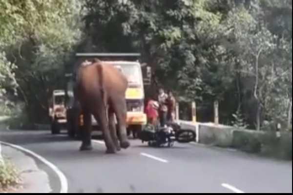 wild-elephant-in-national-highway