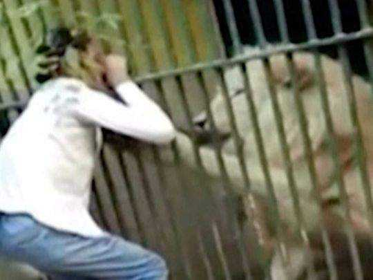 zookeeper-attacked-by-lion