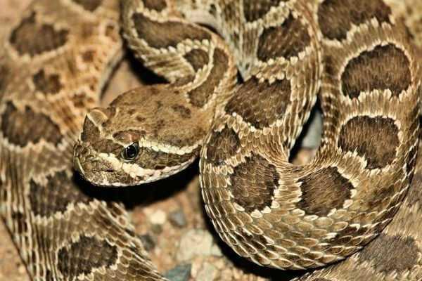 snake-eating-video