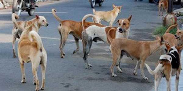 30-people-bitten-by-rabid-dogs