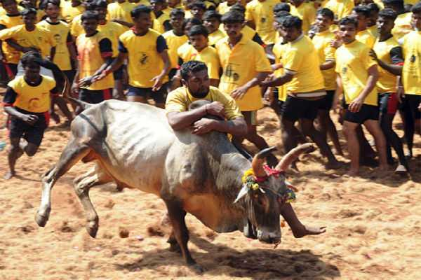 jallikattu-in-7-places
