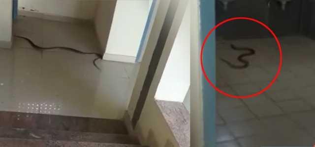 snake-entered-women-s-hostel-coimbatore