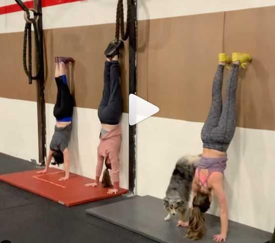 australian-dog-turns-gym-trainer