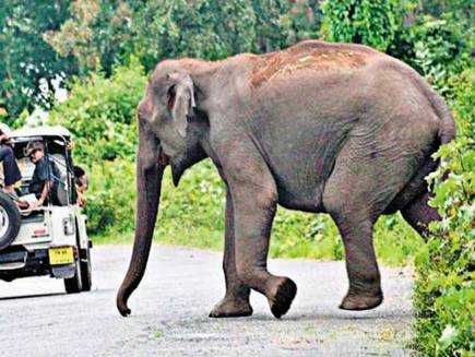 wild-elephant-attacks-woman-trampled-to-death-near-coimbatore