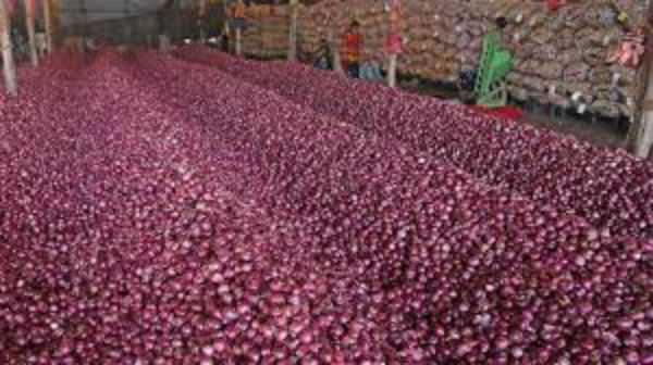 slash-in-onion-price
